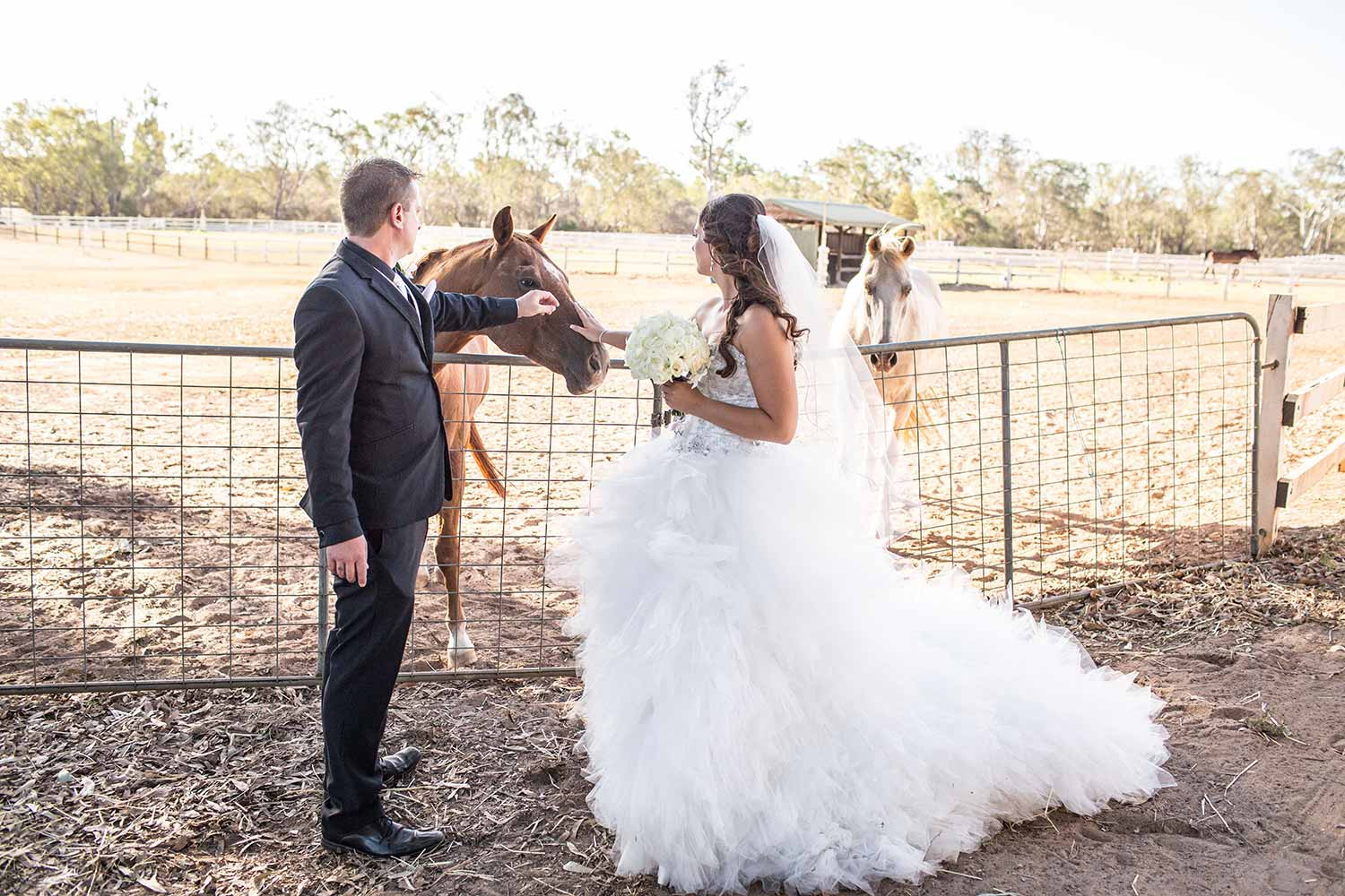 bride and groom with a horse at Brookleigh Estate